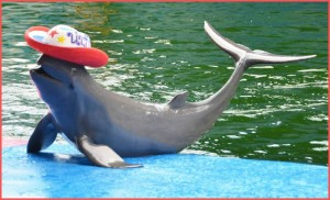Dolphin show at Pattaya Dolphin World