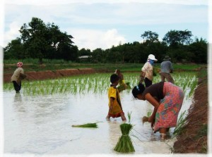 Rice farmer family in Isaan