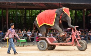 Elephant show in Pattaya